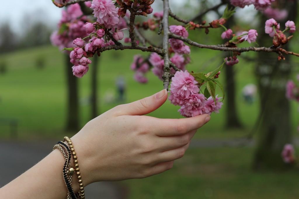Kirschblüten goldener Schmuck Modeblog Bonn Rheinaue