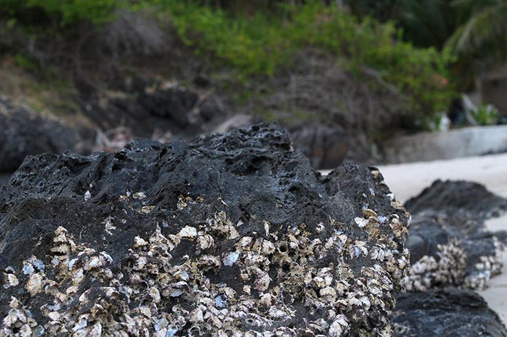 Bang Tao Beach Strand Traumstrand Thailand Koh Lanta Anda Lanta Resort Felsen Muscheln Korallen 7
