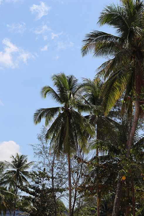 Strandmode Coconut Beach Khao Lak Thailand Traumstrand Palmen Meer Paradies Reiseblog 4