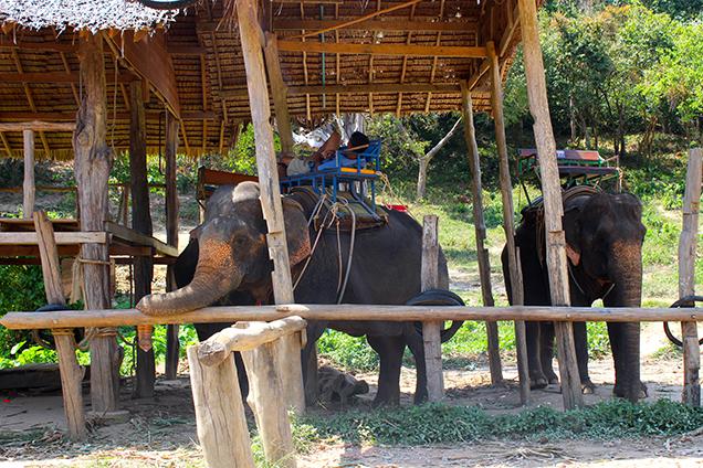 Koh_Lanta_Sightseeing_Sehenswürdigkeiten_Reiseblog_Wasserfall_Nationalpark_Elefanten_reiten 2