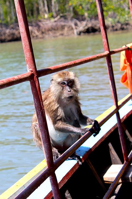 Koh_Lanta_Sightseeing_Sehenswürdigkeiten_Reiseblog_Affen_Lontailboot