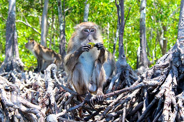 Top 5 Koh Lanta Sightseeing & Sehenswürdigkeiten auf der Insel in Thailand