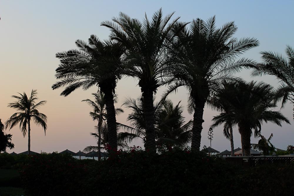 Palmen View Palm Sonnenuntergang Wanderlust Travel Reiseziel VAE Reiseblog