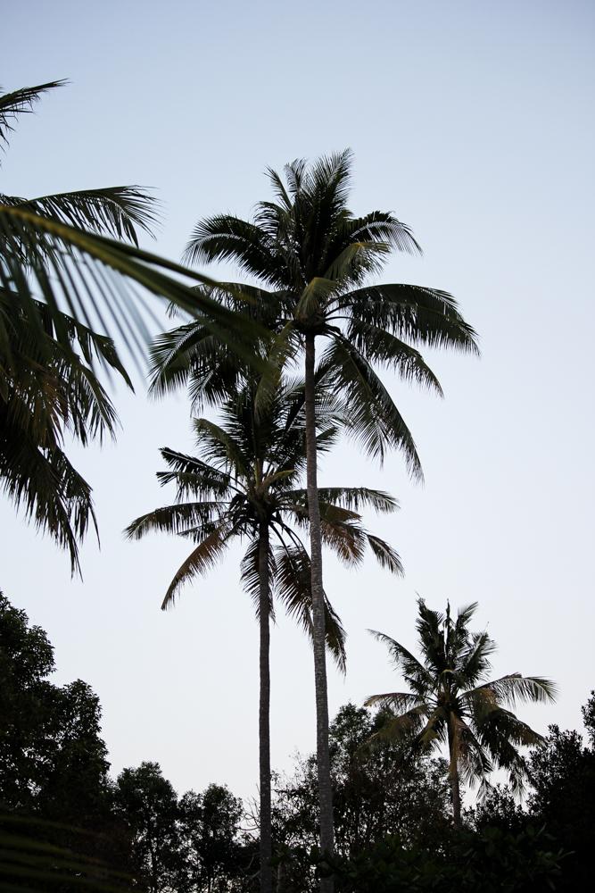 Chivapuri Beach Resort Hotel Koh Chang Thailand Palmen Traumstrand Palms Beach