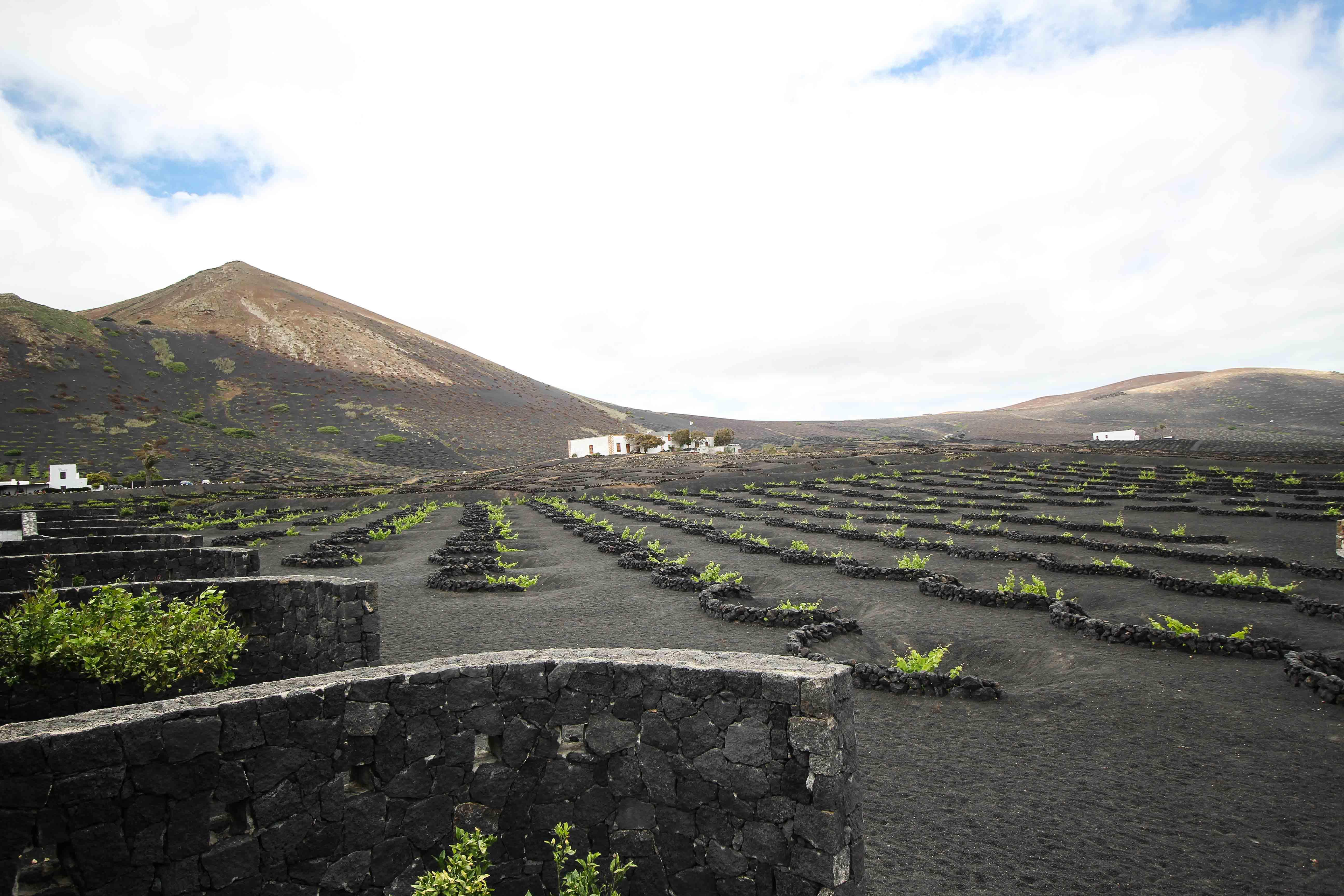 Top 10 Tipps Lanzarote Sehenswürdigkeiten Insider Tipps Lanzarote Spanien La Geria Weinbaugebiet Wein Vulkan