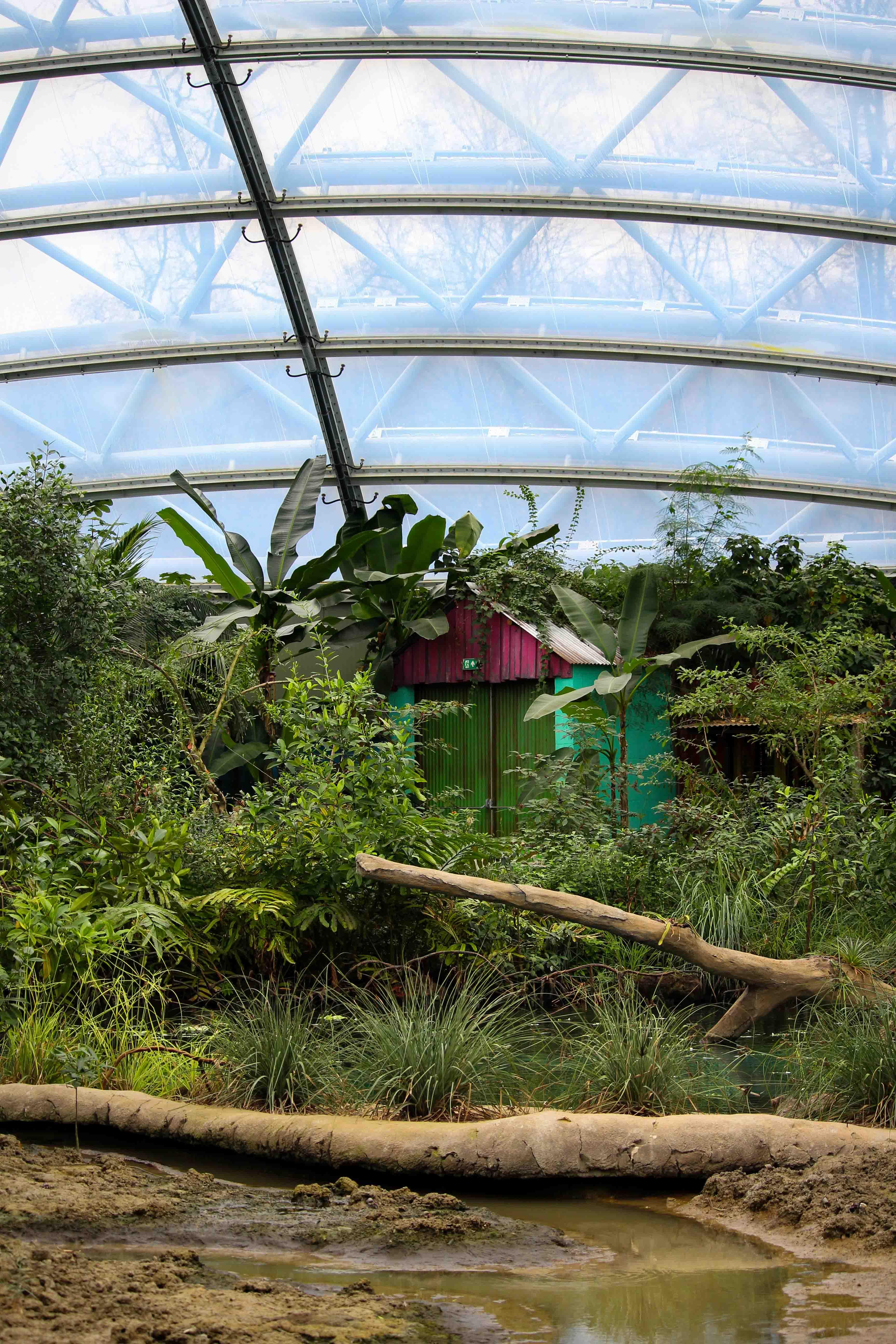 Wochenendtrip Holland das andere Holland Burgers Zoo Arnheim Mangroven Welt 2