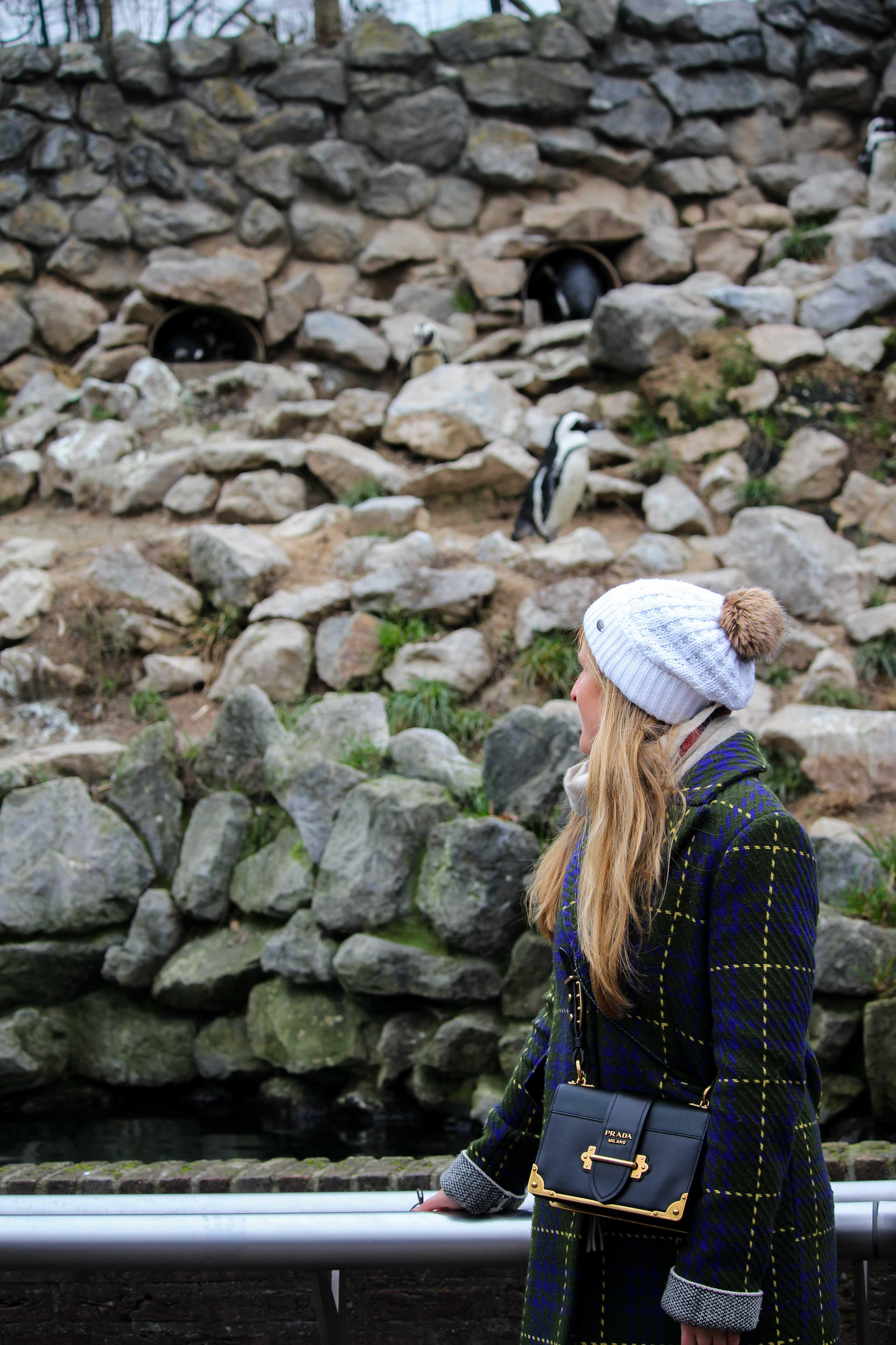 Wochenendtrip Holland das andere Holland Burgers Zoo Arnheim Pinguine