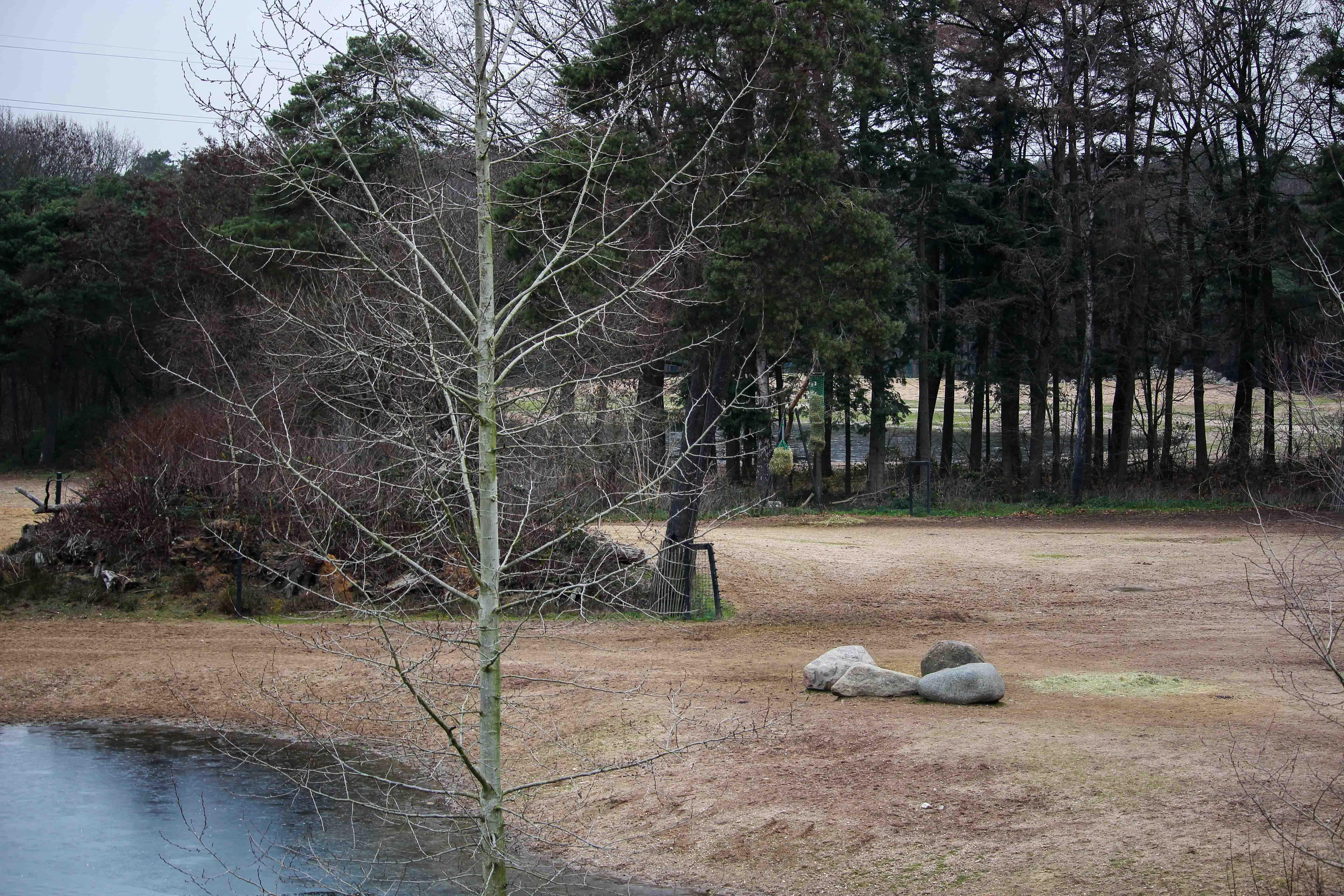 Wochenendtrip Holland das andere Holland Burgers Zoo Arnheim Safari Welt Landschaft