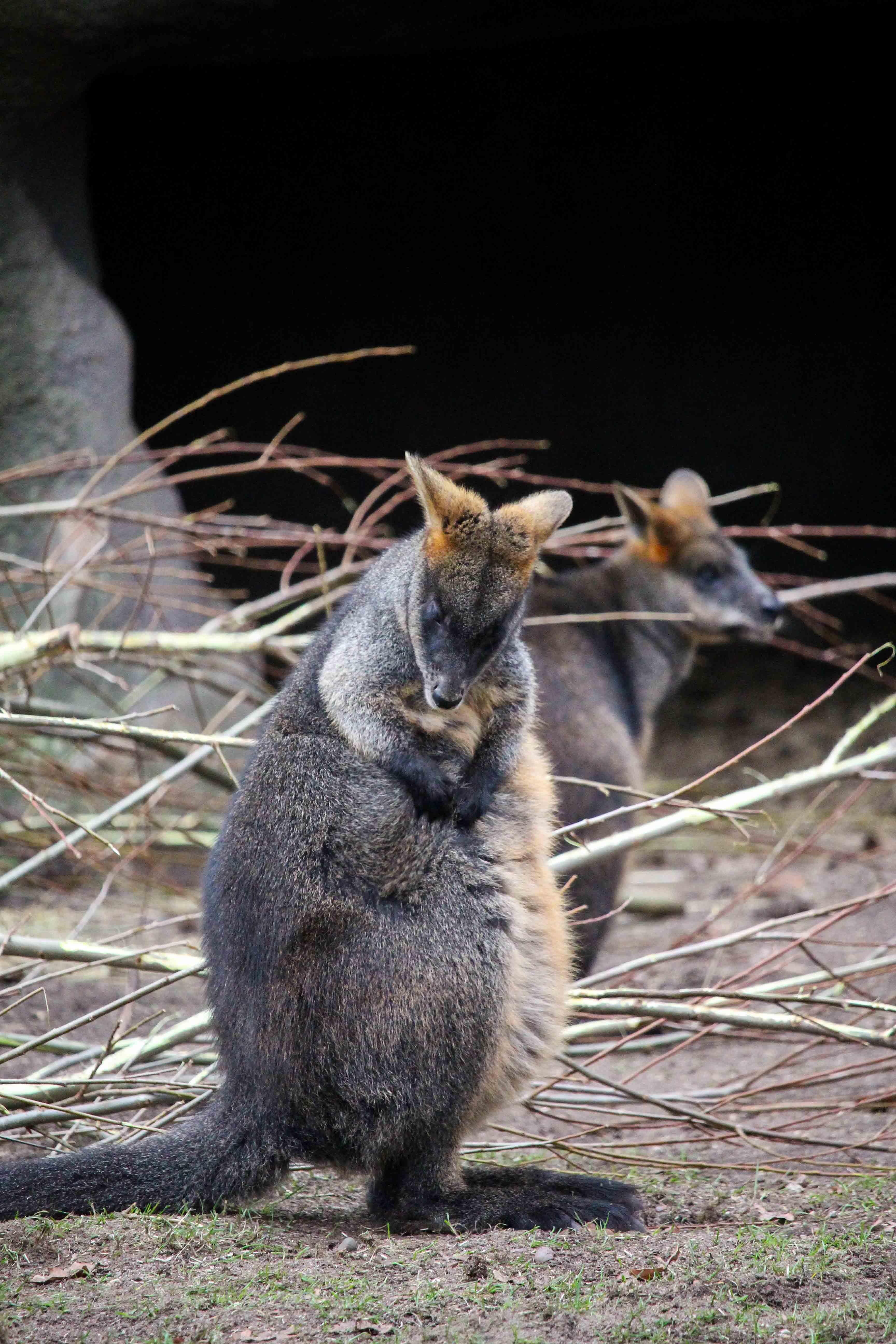 Wochenendtrip Holland das andere Holland Burgers Zoo Arnheim Safari Welt
