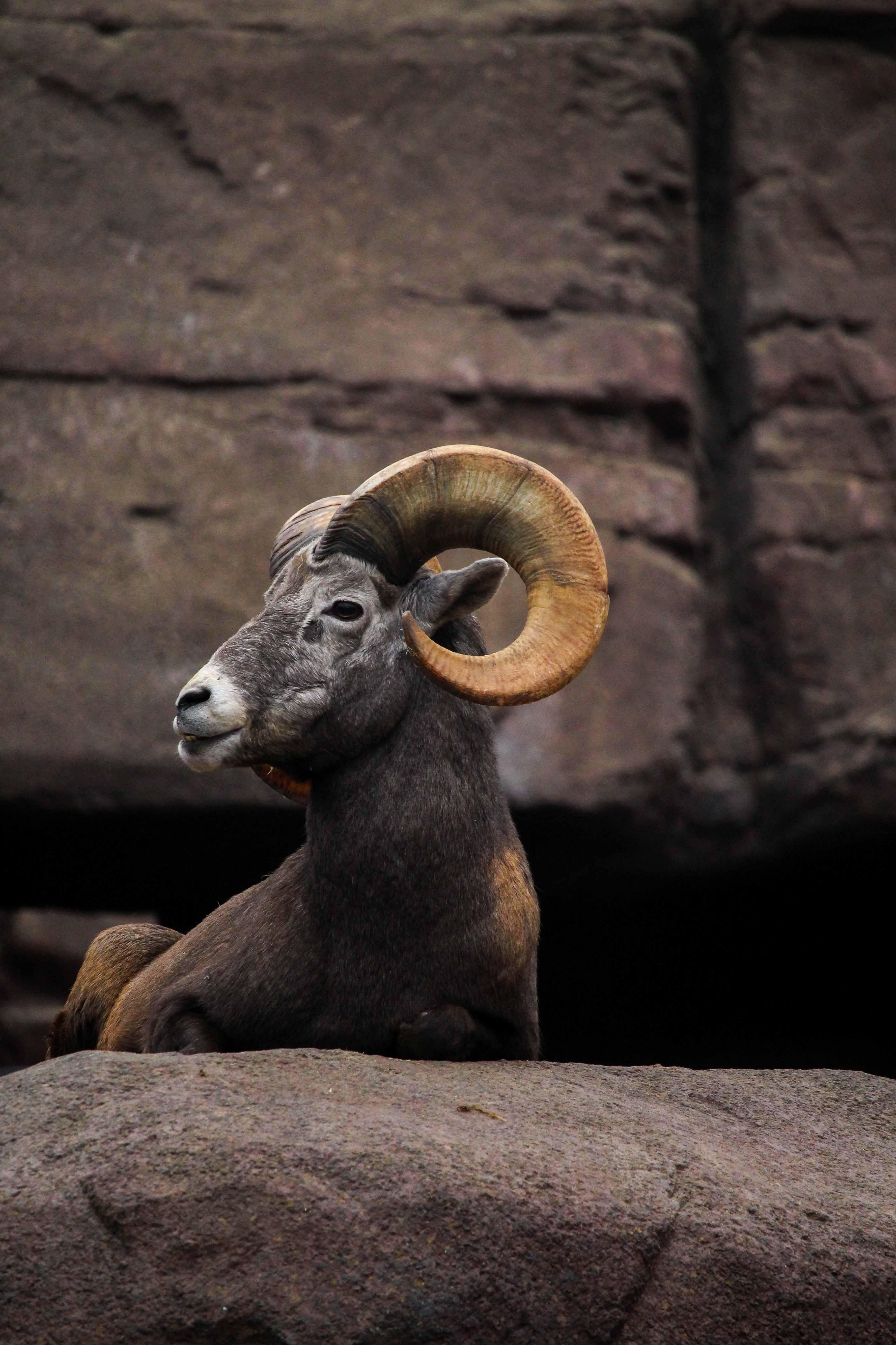 Wochenendtrip Holland das andere Holland Burgers Zoo Arnheim Wüsten Welt Bergziege