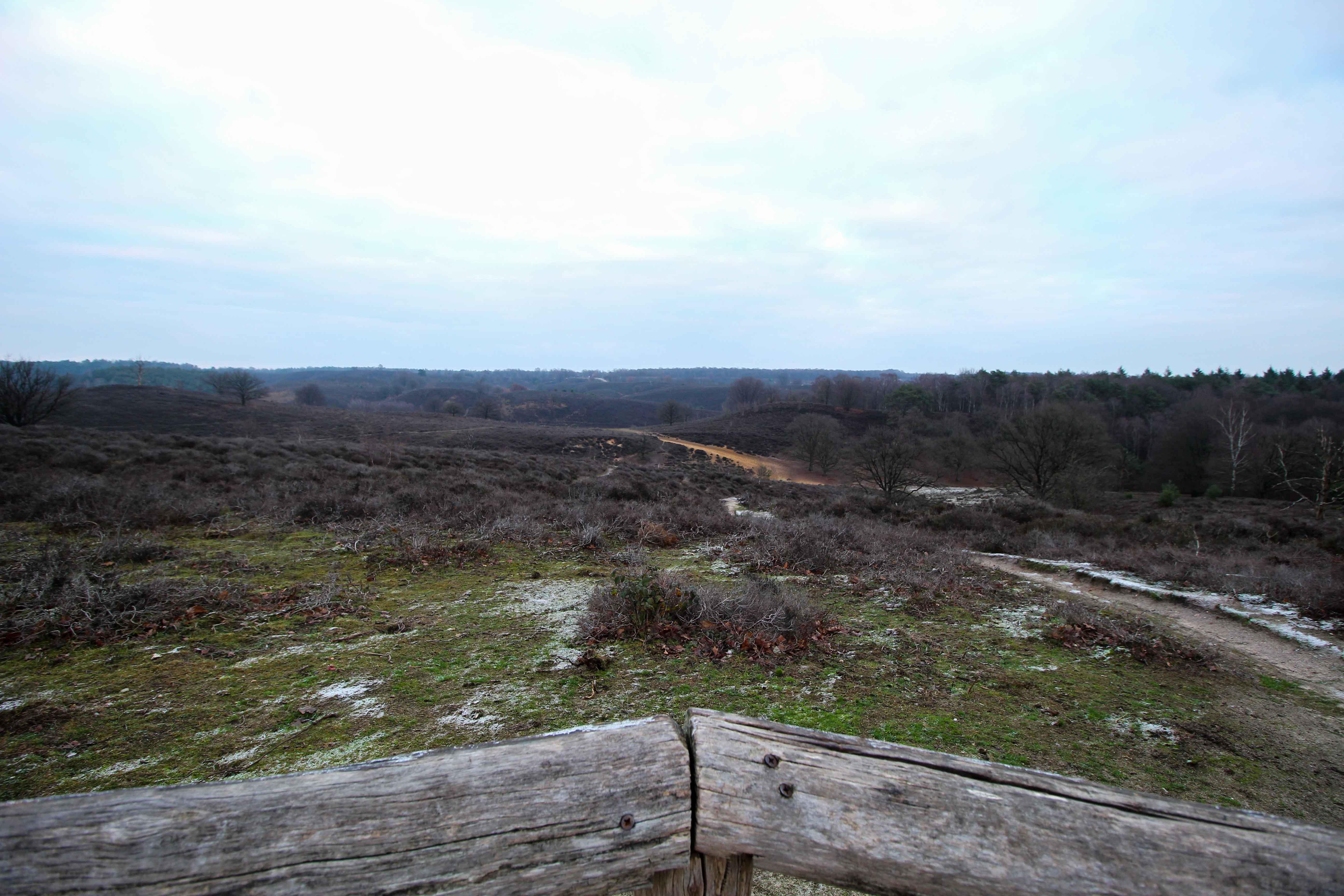 Wochenendtrip Holland das andere Holland Nationalpark Veluwe Transferium Posbank Natur Weide Reiseblog