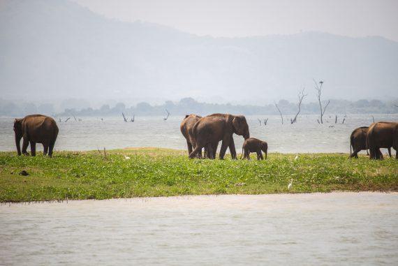 Top 10 Tipps Sri Lanka Reisetipps Reiseblog Sri Lanka Rundreise besten Tipps