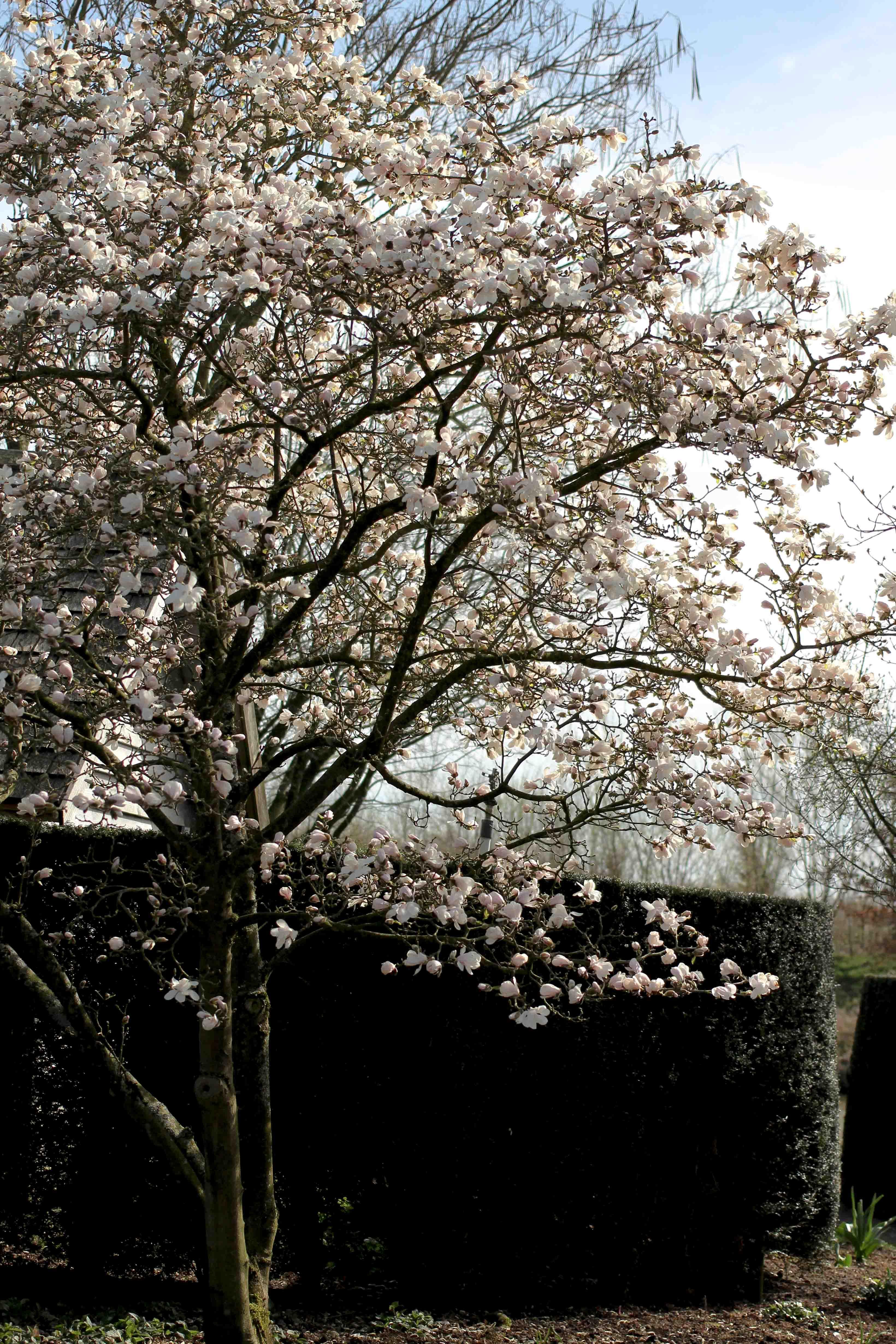 die Gärten von Appeltern Holland Wochenendtrip Tuinen van Appeltern das andere Holland Reiseblog Ausflug Deutschland Baum blüten