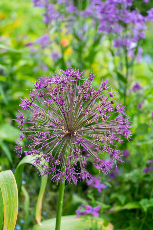 Monets Garten Givenchy Blumengarten Monet Normandie Rundreise beste Reiseroute Seine Flusskreuzfahrt AROSA Sehenswürdigkeiten Sightseeing Reiseblog