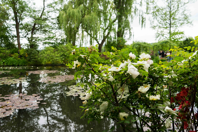 Monets Garten Givenchy Seerosenteich Monet Normandie Rundreise Tipps beste Reiseroute Seine Flusskreuzfahrt AROSA Sehenswürdigkeiten Sightseeing Reiseblog