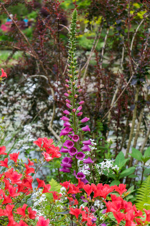 Monets Garten Givenchy Seerosenteich Monet Normandie Rundreise beste Reiseroute Seine Flusskreuzfahrt AROSA Sehenswürdigkeiten Sightseeing Reiseblog 4
