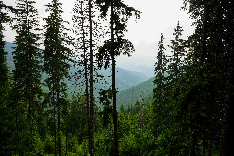Top 10 Tipps Hermannstadt Sibiu Rumänien Reiseblog Wandern Transilvanien Palantis Natur 2