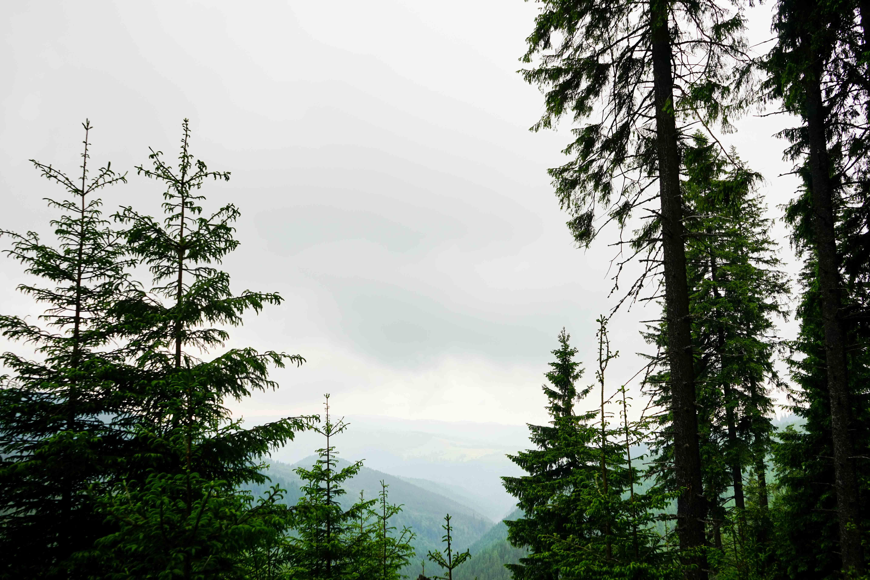 Top 10 Tipps Hermannstadt Sibiu Rumänien Reiseblog Wandern Transilvanien Palantis Natur 3