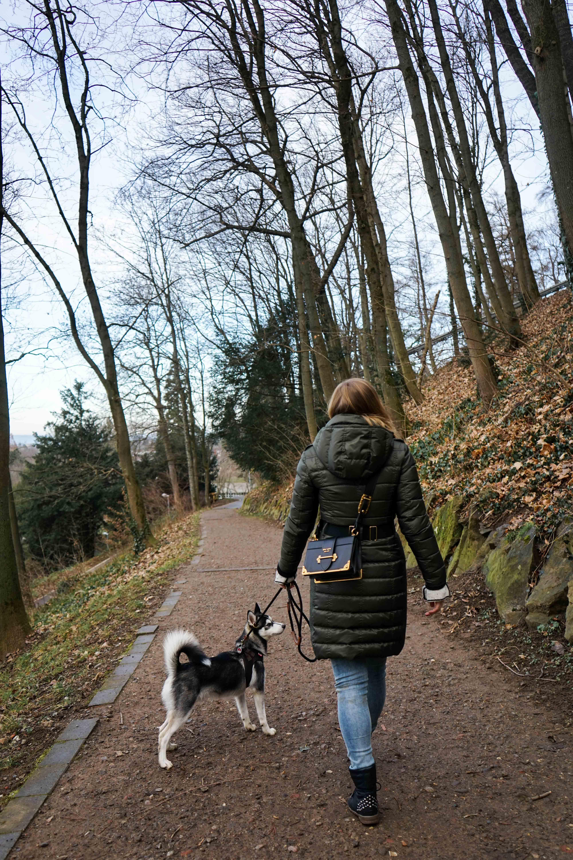 Freiburg Schlossbergturm Spazieren Natur Wanderung Reiseblog Freiburg Tipps Pomsky