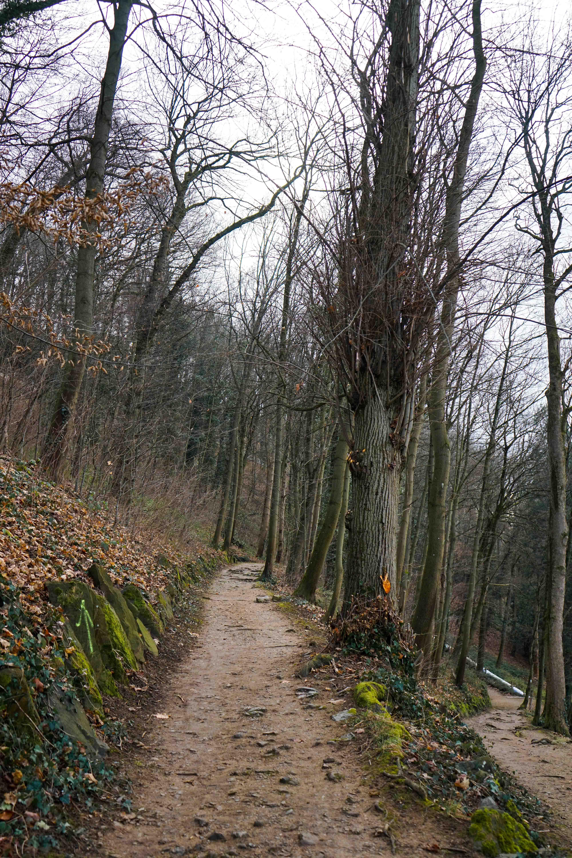 Freiburg Schlossbergturm Spazieren Natur Wanderung Reiseblog Freiburg Tipps