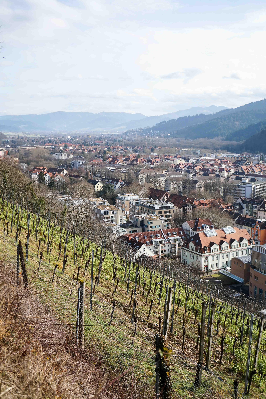Freiburg Sehenswürdigkeiten Freiburg Schlossbergturm Spazieren Natur Wanderung Reiseblog Freiburg Tipps Weinberge
