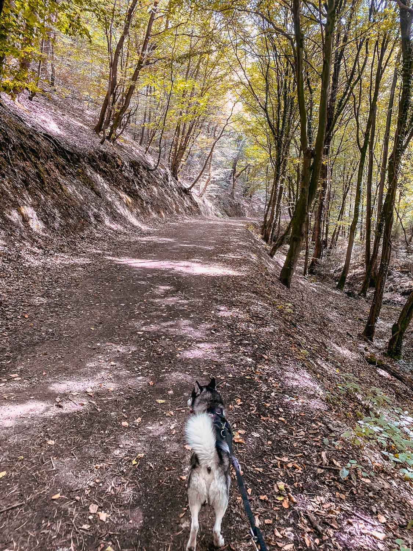 Wandern im Bergischen Land NRW Rundwanderweg Rüden Wanderroute einfach Wupper Reiseblog 4