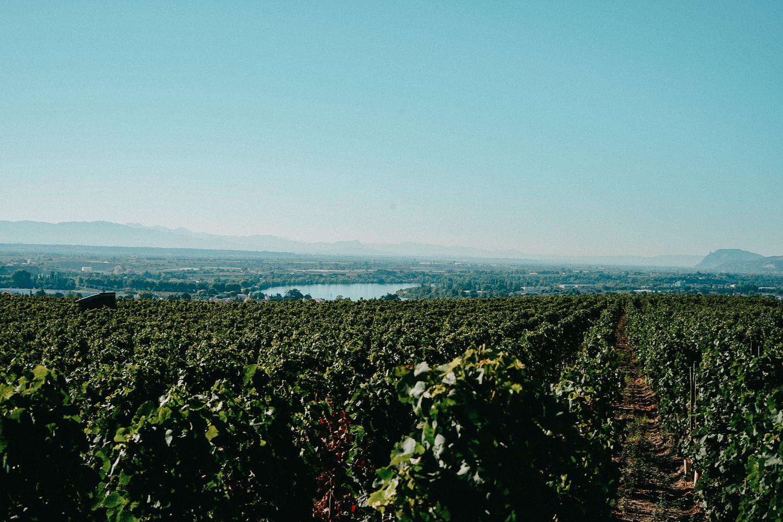 AROSA Flusskreuzfahrt Frankreich Ausflug Lyon L'Hermitage Weinfelder Weinprobe Weinwanderung Rhone Reiseblog 2