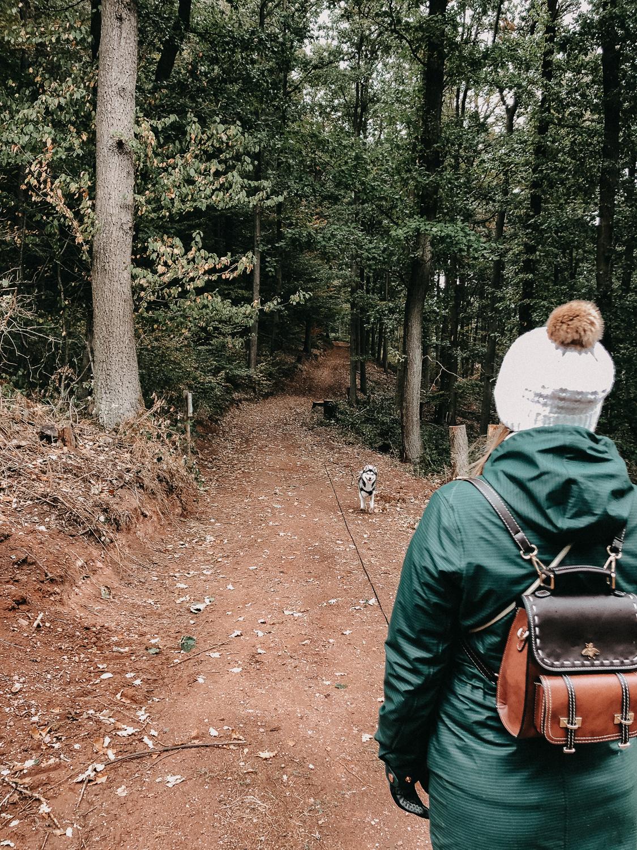 Reisen mit Hund Wochenendtrip Deutschland mit Hund Landidyll Hotel Wandern Pfalz Reiseblog Pomsky