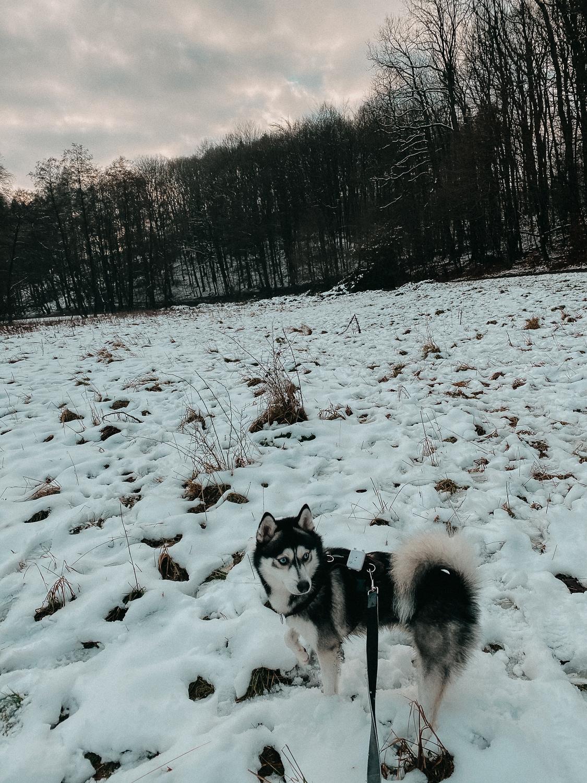Winterwanderung Siebengebirge Schnee Pomsky Reise Blog Deutschland 4