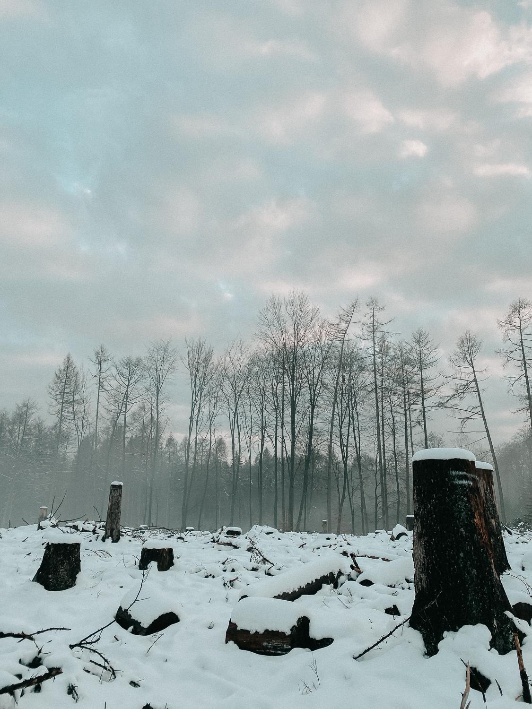 Winterwanderung Siebengebirge Schnee Pomsky Reise Blog Deutschland 5