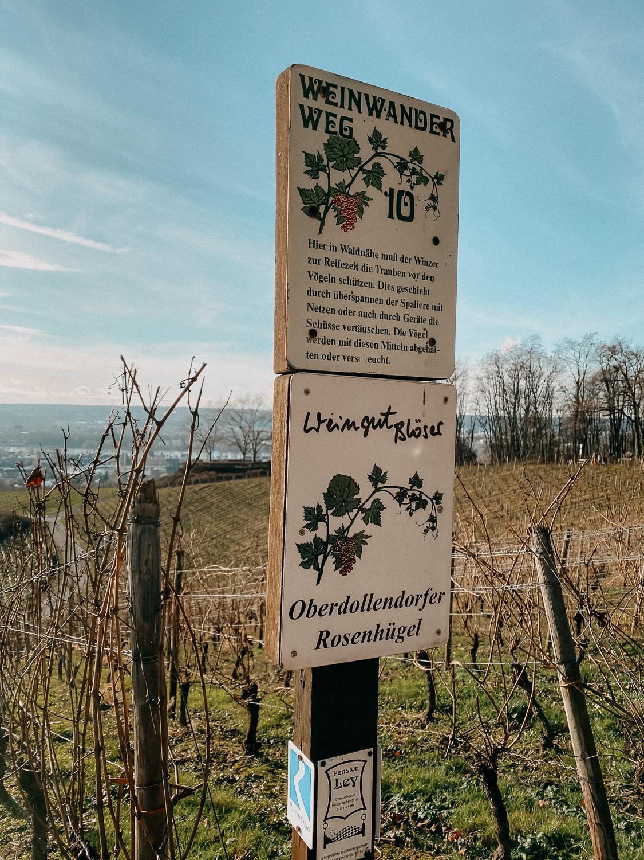 Bonn Wanderungen Beste Wanderroute Oberdollendorf Wandern mit Hund Weinbergewanderung Ausflug NRW Reiseblog 8