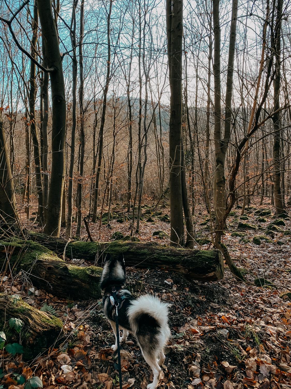 Bonn Wanderungen Beste Wanderroute Oberdollendorf Wandern mit Hund Weinbergewanderung Ausflug NRW Reiseblog Pomsky
