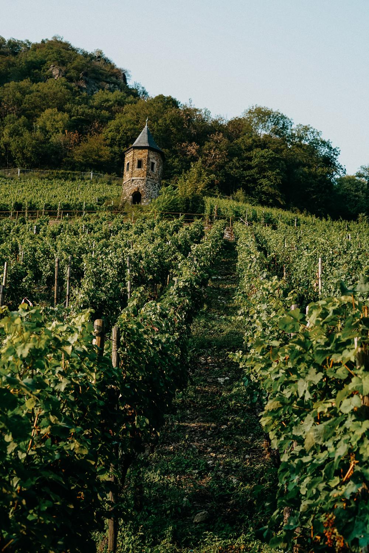 Weinwanderung Rhöndorf Wanderung Weinberge Bonn NRW Top Wanderungen Reiseblog Wandertipps Wanderrouten 4