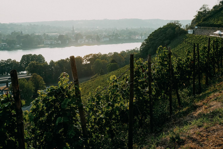 Weinwanderung Rhöndorf Wanderung Weinberge Bonn NRW Top Wanderungen Reiseblog Wandertipps Wanderrouten 5