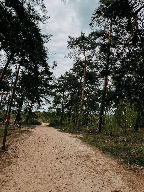 Wanderung Bonn Umgebung Spich Wahner Heide Wanderroute Reiseblog Wandern Ausflug NRW 2