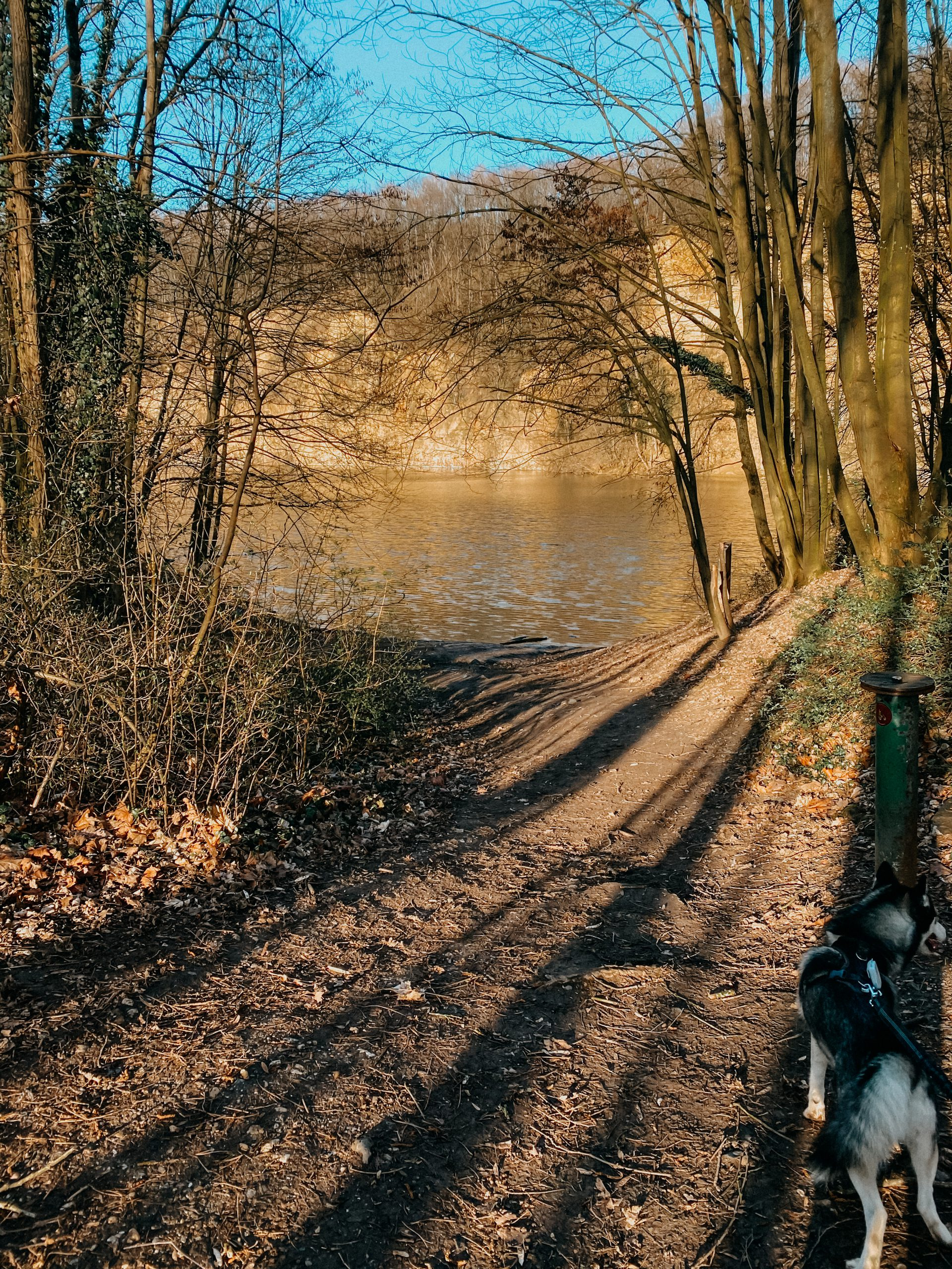 Wanderungen Bonn Wandertour Top Wandern Dornheckensee 2