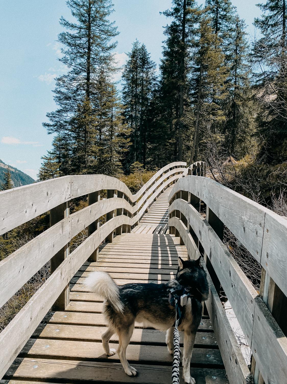 Urlaub Südtirol Tipps Wanderung beste Ausflüge Bergwanderung Burkhardklamm Klamm Wanderung Reiseblog 3
