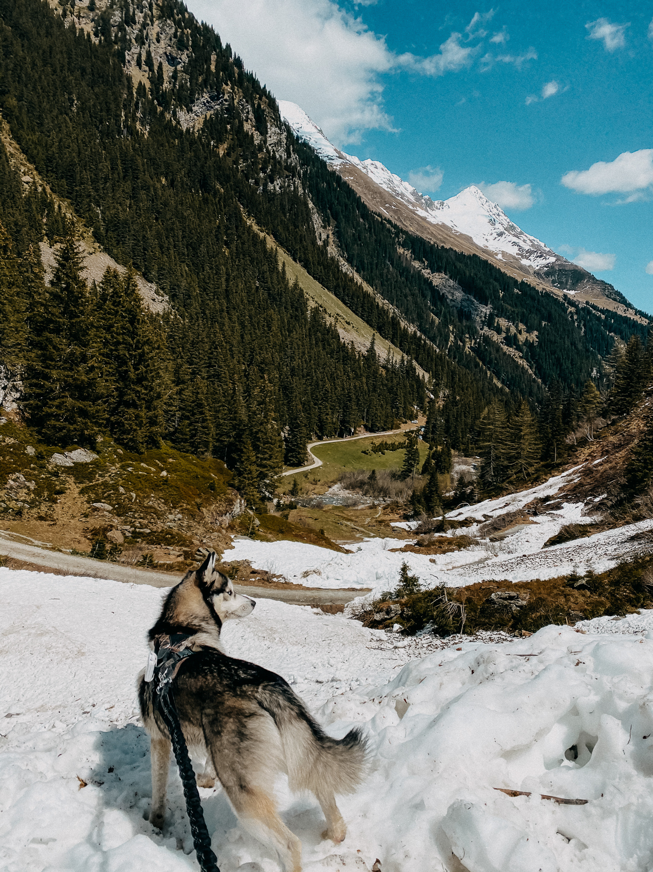 Urlaub Südtirol Tipps Wanderung beste Ausflüge Bergwanderung Burkhardklamm Klamm Wanderung Reiseblog Pomsky