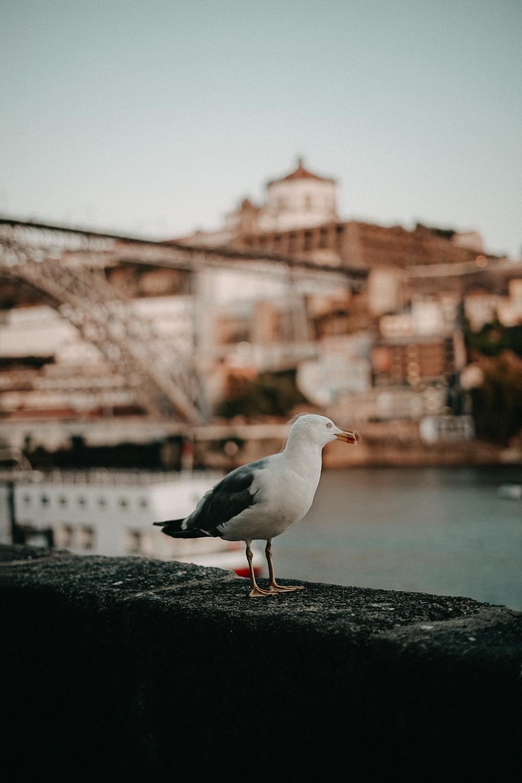 A-ROSA Flusskreuzfahrt Douro Portugal Möwe Brücke Aussicht Porto Reiseblog