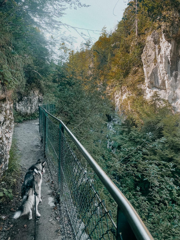 Wanderung Tirol Gießenbachklamm Top Wanderungen Tipps Wanderung mit Hund Pomsky